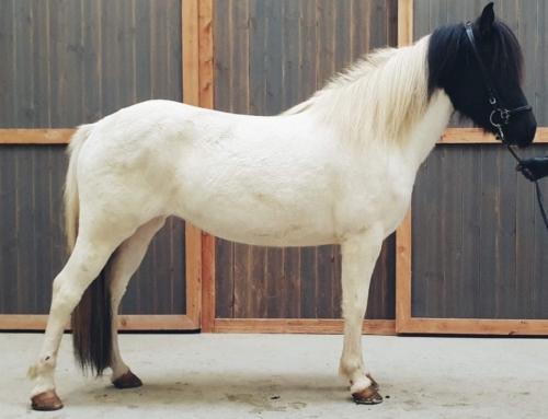 Spannende Pferde im Stall
